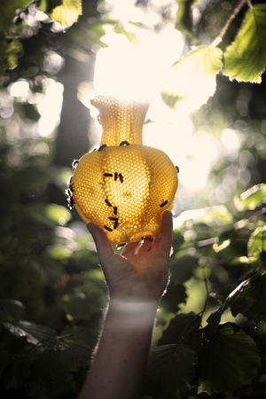 Tomas Libertiny vases made by bees